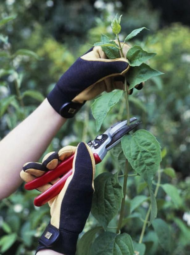Discover various pruning tools that will help keep your garden in tip-top shape.