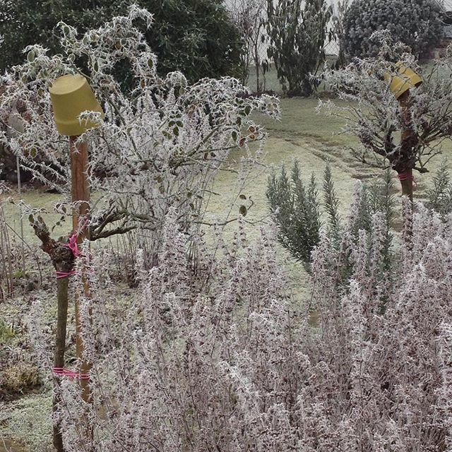 #kräuter#melisse#rosmarin#roses #rosen#rosenstämmchen#winter#frost#raureif#rime#whitefrost#gefroren#hoarfrost#silence#ruhe#stille#garten#garden#nature#natur#achtsamkeit#mindfulness#stimmung#joy#design#freude#gartengestaltung#naturelovers#gartenglück#happiness