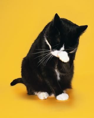 Is Anti-Hairball Cat Food More Fattening? {Article}--If you're a cat parent, hairballs are a fact of life. Cats bathe themselves with their tongues, which means they swallow hair. Unfortunately, it doesn't always stay down, although anti-hairball food is one way of preventing this. Consult your veterinarian before making changes to your cat's diet.