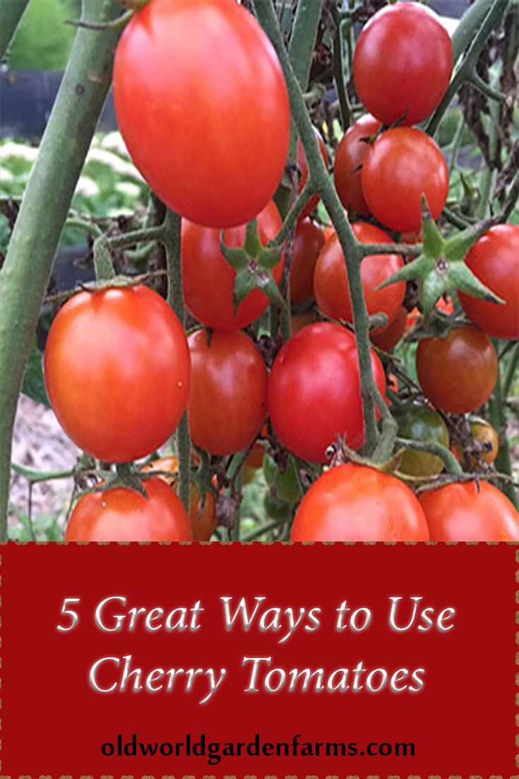 Best 25 Freezing Cherry Tomatoes Ideas On Pinterest Freezing Tomatoes Freeze Tomatoes And