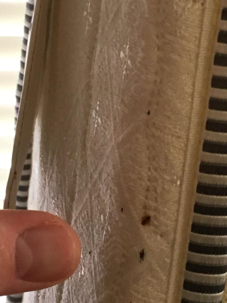 Bed bugs control Removal Extermination services