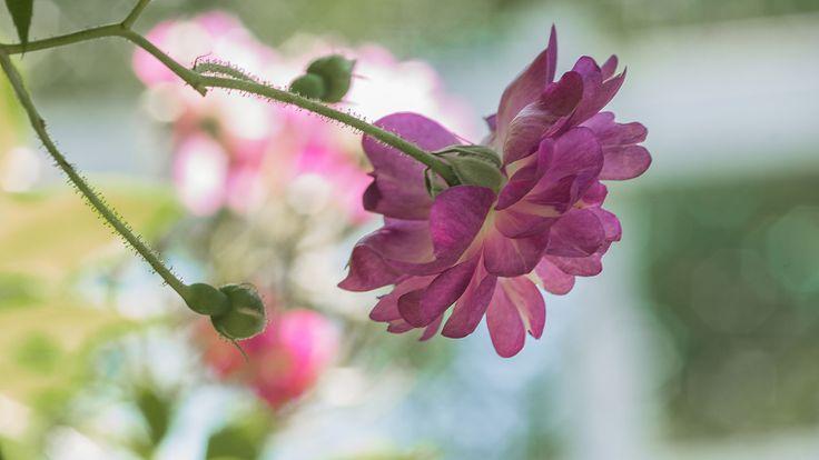 faire livrer des fleurs 22 #fleurs #bouquet