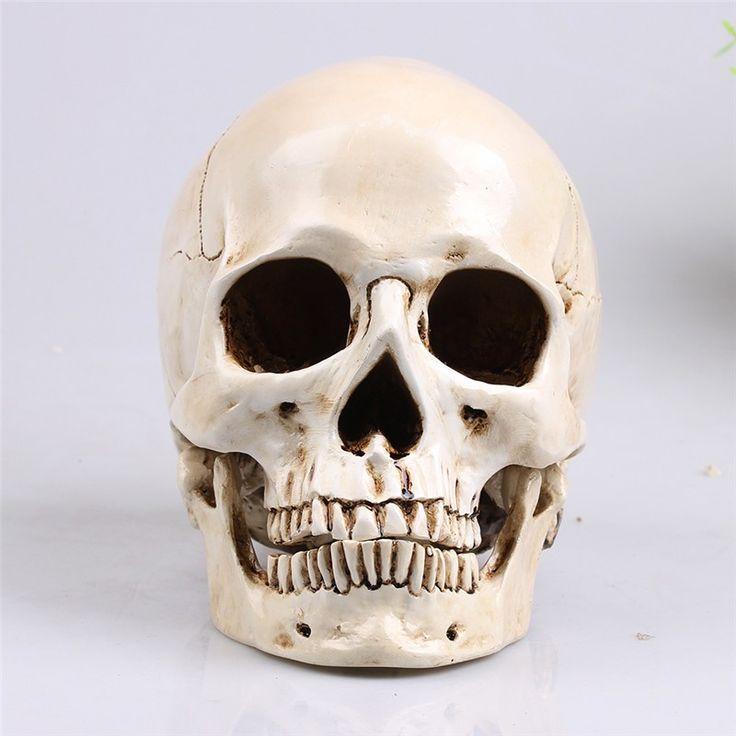 Dekorasi tengkorak Mongolia Kepala Model Replika Realistis Lifesize 1:1 Resin Human Skull Dekorasi Rumah Seni & Kerajinan Persediaan