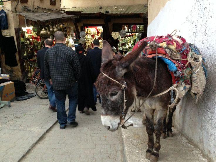 Medina Fez transport