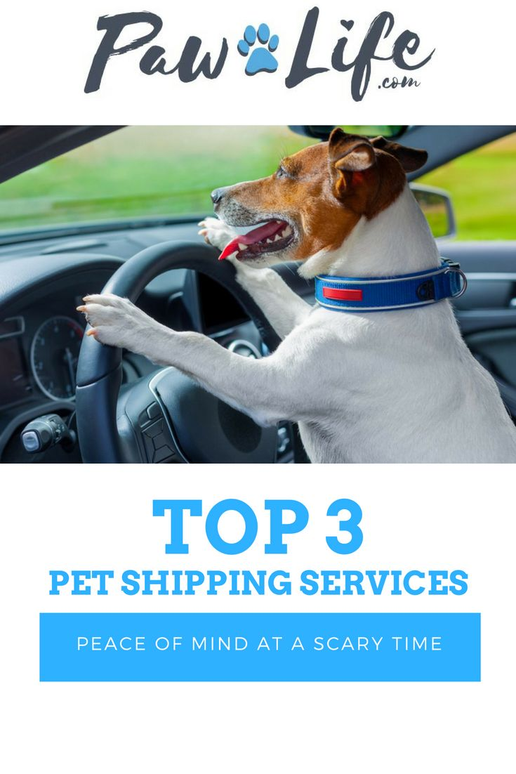 Long Distance Travel Can Be A Frightening Experience For Dogs Cats