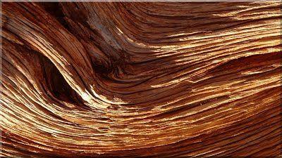 Tisztított uszadékfa