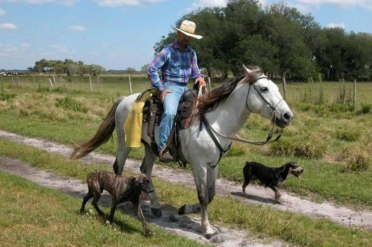 The Catahoula Cow Dog: Catahoula Cur, The Louisiana Cattle Dog