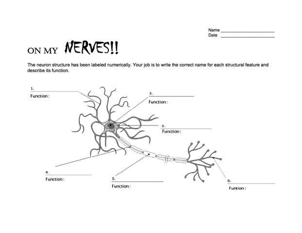 Worksheets Neuron Worksheet neurons and worksheets on pinterest