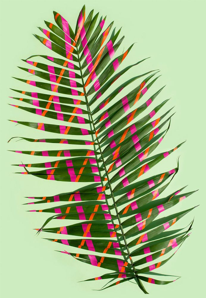 Wonderplants: Art Project by Sarah Illenberger | Inspiration Grid | Design…