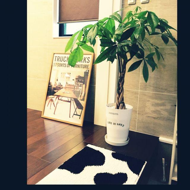 パキラ身長伸ばそう( ̄▽ ̄)/玄関マット/トラックポスター/パキラさん成長期( ̄▽ ̄)/玄関/入り口…などのインテリア実例 - 2015-05-29 20:17:11 | RoomClip(ルームクリップ)