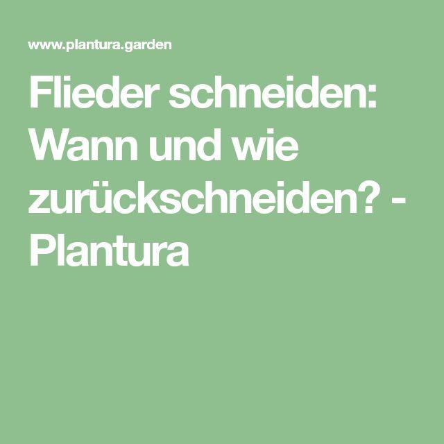 Flieder schneiden: Wann und wie zurückschneiden? - Plantura