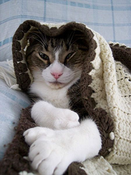 Image detail for -polydactyl cats picture gallery nukey d pictures of many toed cats aka ...