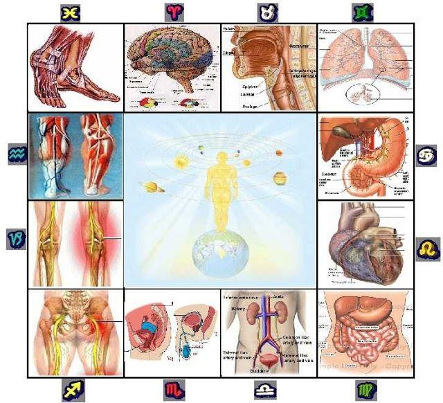 ArteSanos de la Salud: Astrología Médica: La casa VI y la salud