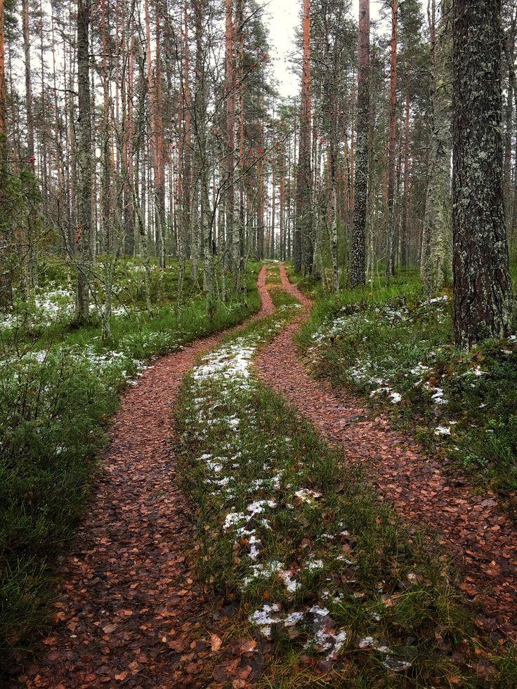 Metsätie Onttolassa, Liperi