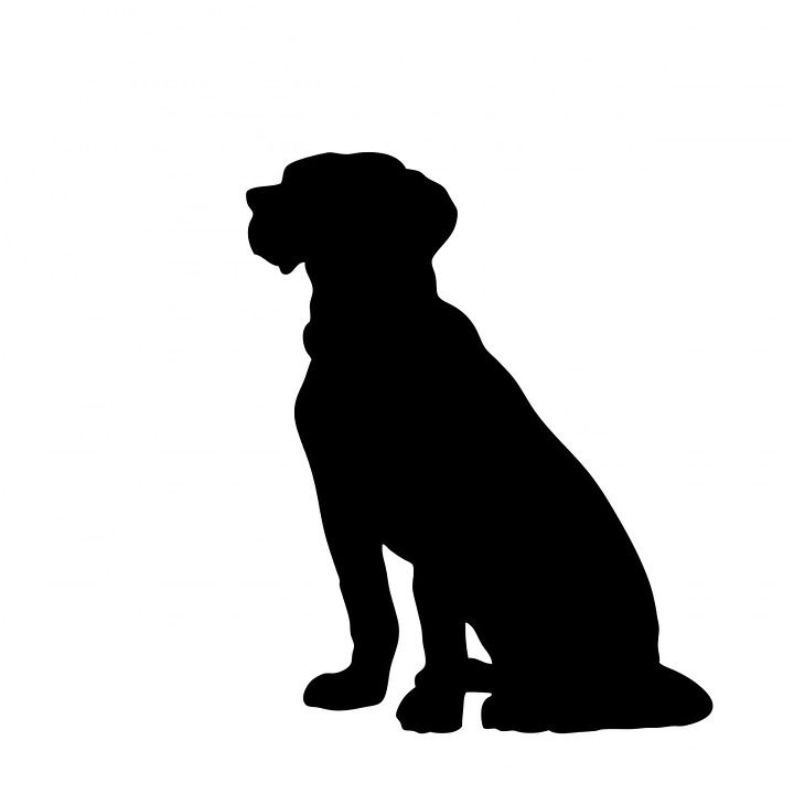 Hund, Dyr, Siddende, Stor, Kæledyr, Hunde, Sort