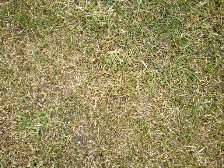 Les 19 meilleures images du tableau quand scarifier le gazon ou la pelouse sur pinterest gazon - Engrais gazon printemps ...