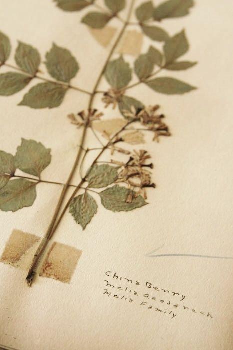 Vintage School Biology Scrapbook, Collection, Handwritten ...