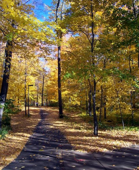 Michigan State University Campus in the fall is beautiful! #LeavesChanging…