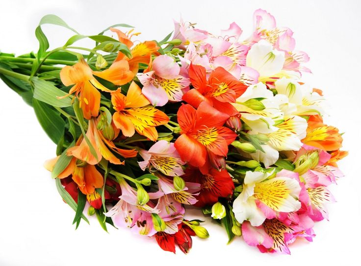 If you are living in Greater Noida and many vocations are coming these day.   Everyone would like to send flowers and gift to their relative and friends.   To fulfill your wish you should to choose best flowers and gift providers.   BUYFLOWER is best option for you. If you are really interested then   Call us: +91 9582148141