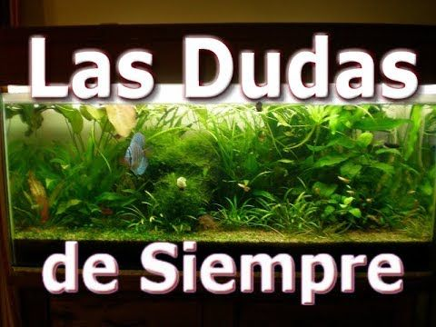 Youtube Acuario De Casa Acuarios Peceras