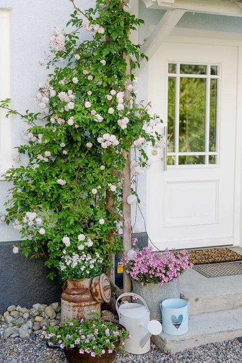Eine Auswahl der schönsten Rosensorten, Pomponetti, Pauls Himalaya-Moschus …   – pflanzen