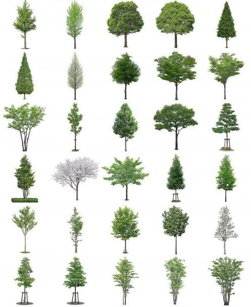 Free PSD Designs & Vectors | 50 PSD files of Furukawa 01 Trees PSD