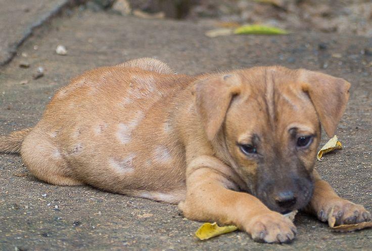 4f6ca4c77d29e865243a6725006028cf - How To Get Rid Of Mange In Dogs At Home