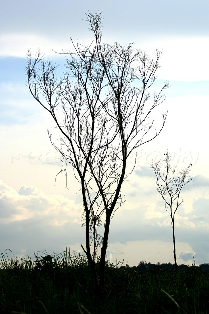 last tree standing..