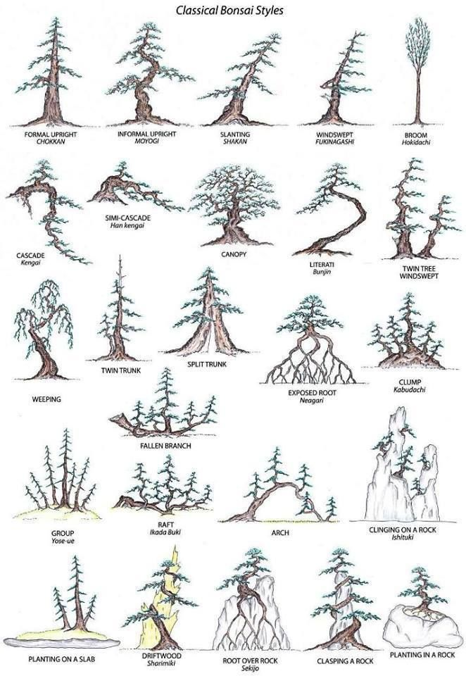 Bonsai Styles...going strong after 5 months/ my bonsai record/ great illustrations