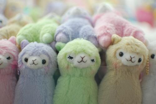 llama or alpaca?? :S: Animal Alpacas, Colors Palat, So Cute, Japan Stuffed Animal, Macaron Colors, Alpacasso Macaron, Colors Alpacas, Alpacas Plush, Alpacas Llamas