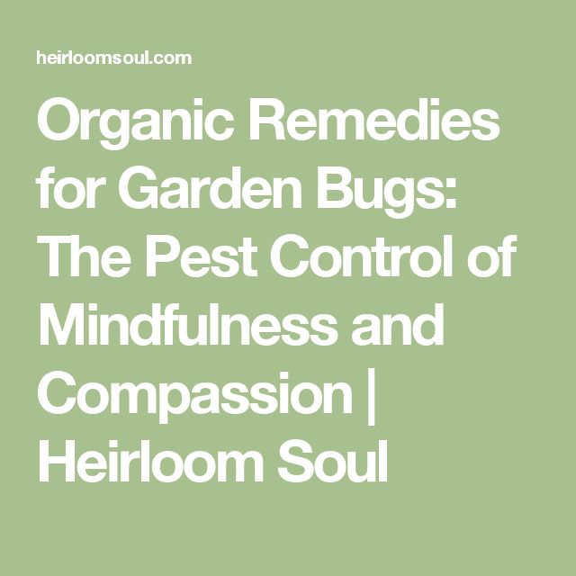 25 Best Ideas About Garden Bugs On Pinterest Insect