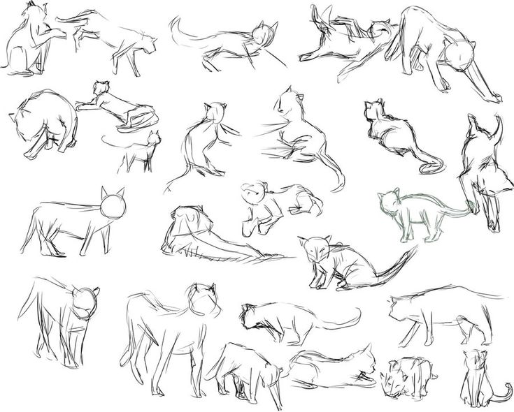 Best Drawing Of A Cat