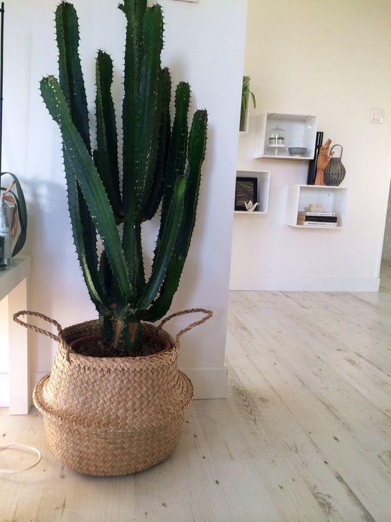 ¿Quieres darle un toque natural a tu casa? No hace falta renovar tooodo el piso para hacerlo, sino simplemente encontrar un objeto natural y bonito para ponerlo en cualquier rinconcito que te apetezca. Las cestas tailandesas hechas de materiales naturales son una opción perfecta. #home #basket #plants #cactus #original #creative #decoration