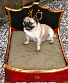 wow.. dog bed made just for pugs.. xD