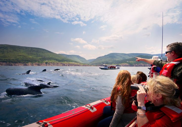 Get up close to some of the world's most amazing creatures! #whalewatching #adventure #capebreton  http://www.cbisland.com/experiences/coastal-experiences/scenic-tours