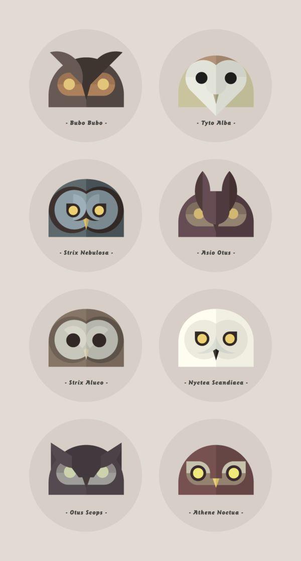 Owls of the World by Alessio Sabbadini, via Behance via The Curious Brain