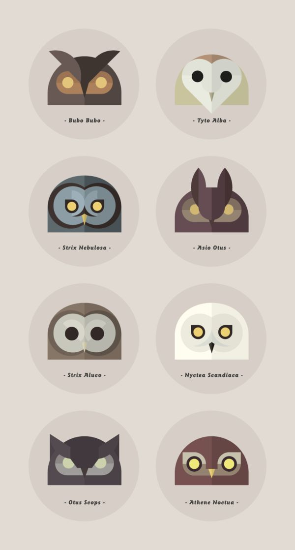 Owls of the World by Alessio Sabbadini, via Behance via The Curious Brain