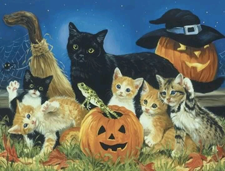 203 best Halloween Cats =Δ= images on Pinterest | Kitty cats ...