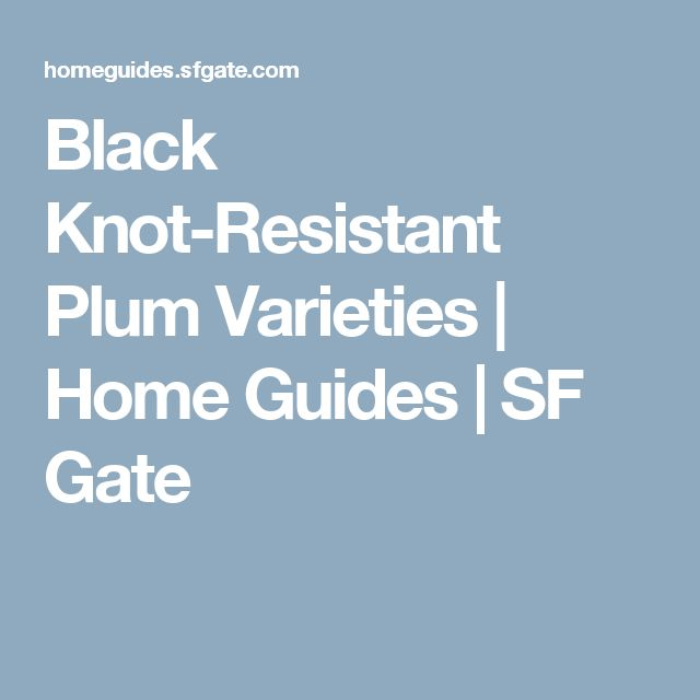 Black Knot-Resistant Plum Varieties | Home Guides | SF Gate