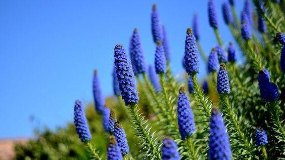Mavi Çiçekler  #wallpaper #çiçek #mavi #blue #flowers