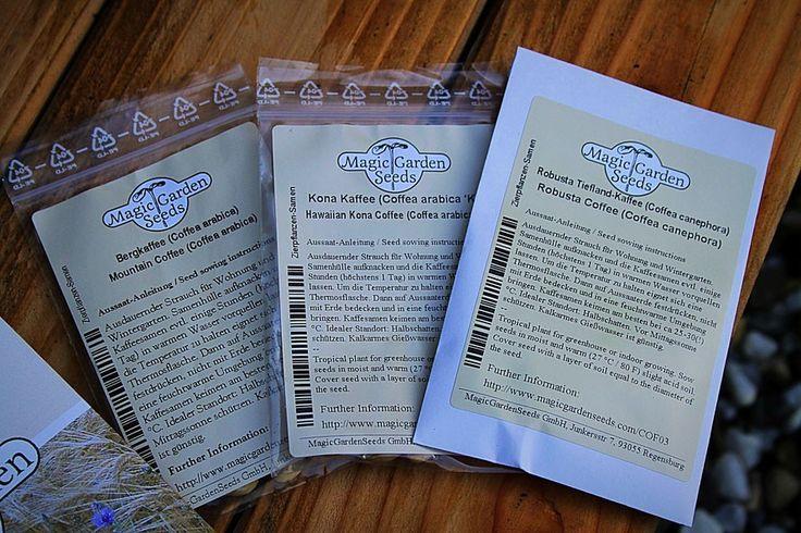 Berg-Kaffee (Coffea arabica) | Robusta-Kaffee (Coffea canephora)  | Kona-Kaffee (Coffea arabica 'Kona')  | Saatgut von Magic Garden Seeds - Mademoiselle-Mara.de