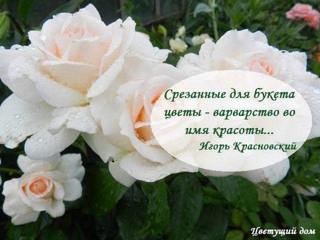 ткань прозрачной восхитительные картинки цветов с цитатами может