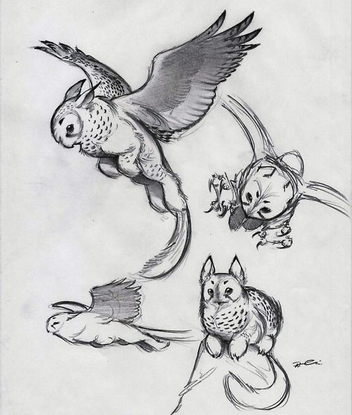 Fantastic character design for an owl griffin.