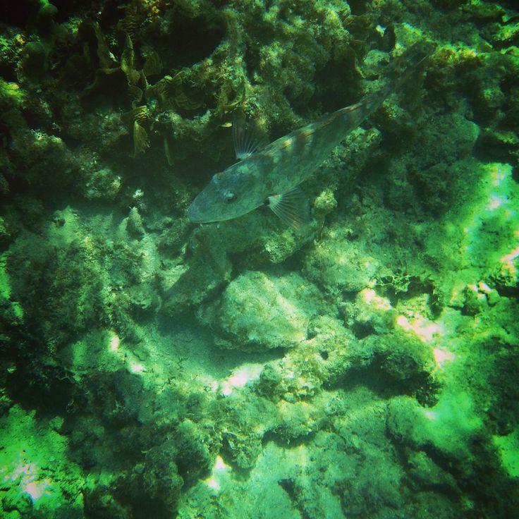 Snorkeling, West Bay, Roatan