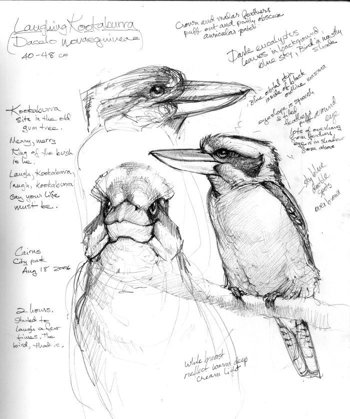 Australia Sketchbook | Drawing The Motmot