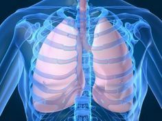 Herbs that can not only boost lung and respiratory health but can also repair it.
