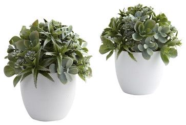 Mixed Succulent w/White Planter (Set of 2) - transitional - plants - Covered In Style Inc