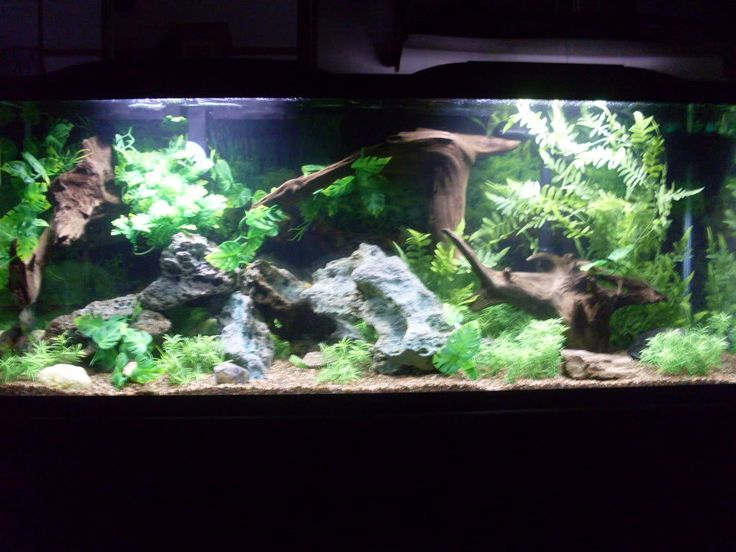 New 55 Gal. South/Central American Cichlid Tank