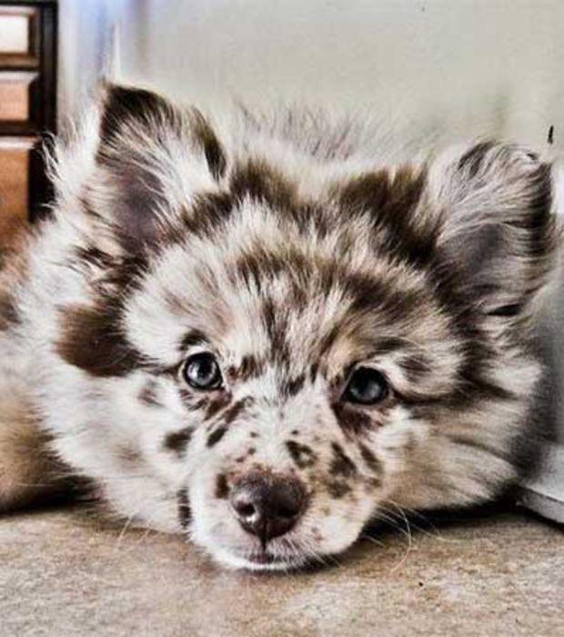 Photo : Un chien rayé