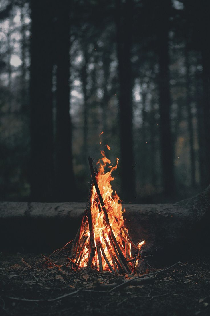 bonfires in the woods